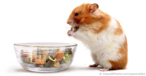 Hamster Product News