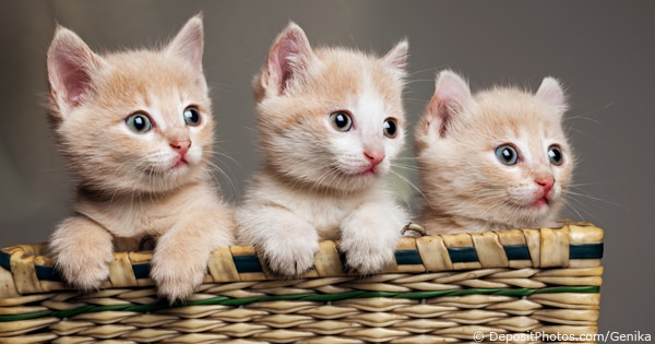 Places To Buy A Cat Or Kitten