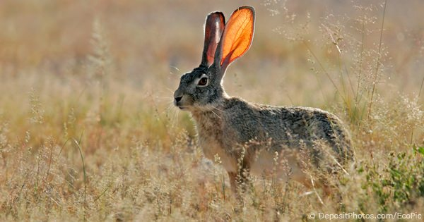 Rabbit Species