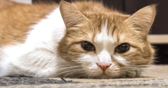 Cat Illnesses & Diseases