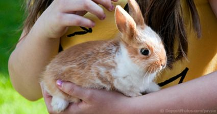 RSPCA Survey Reveals More Than 50% Of All Pet Rabbits Could Be Lonely