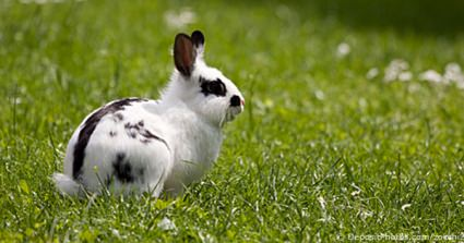 A Vision For The Future Of Rabbit Welfare