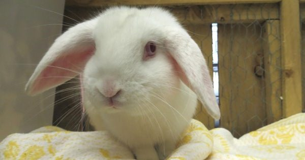 Special Home Sought For Blind Rabbit