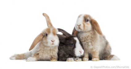 RSPCA Reveals They Are Overrun With Rabbits Needing A Loving Home