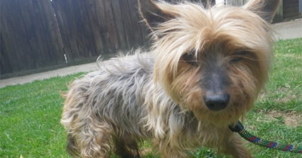 Yorkshire Terrier Found Dumped In A Dustbin