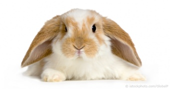 Rabbit Illnesses & Diseases