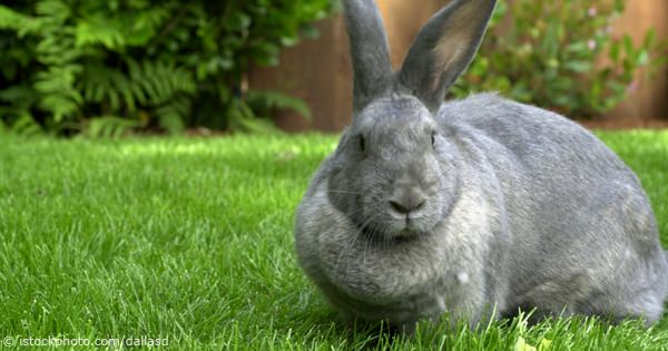 Support Adoption For Pets Offers Top Tips For Rabbit Owners During Rabbit Awareness Week