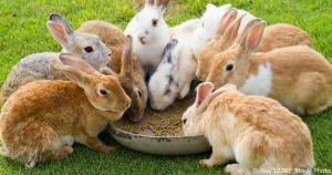 Rabbit Mix And Pellets