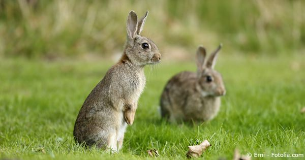 About Rabbits