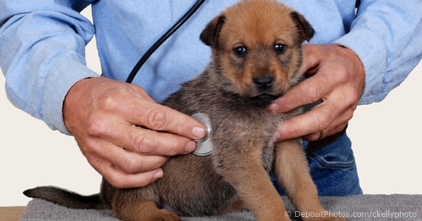 Soaring Cost Of Sickly Puppies As People Buy Mail Order Puppies Online