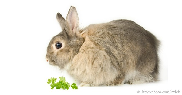How Much And What To Feed Rabbits
