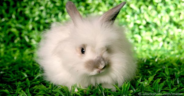 Considerations Prior To Buying A Rabbit