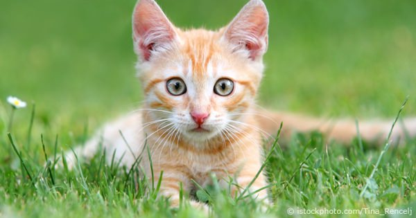 Considerations Prior To Buying A Cat Or Kitten