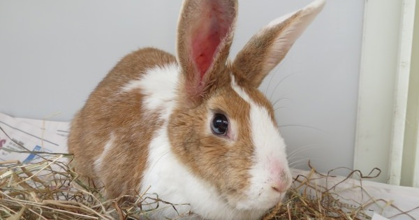 Rabbit Found In Poor Condition In Ayrshire Woodland