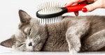 Grooming Cats