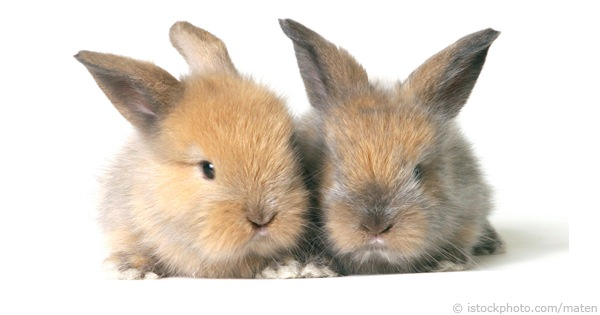 Selecting A Healthy Rabbit
