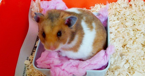 Hamsters Abandoned In Shoe Box
