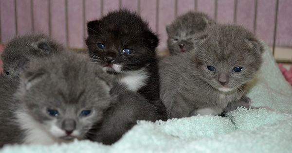 Blue Cross Kittens Looking For New Homes