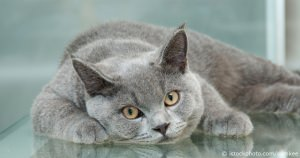 Vital Signs And Biological Facts About The Pet Cat